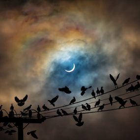 The Birds by Adrian O'Neill - Animals Birds ( sky, moody, birds, sun, eclipse,  )