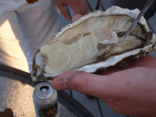 biggest oyster ever