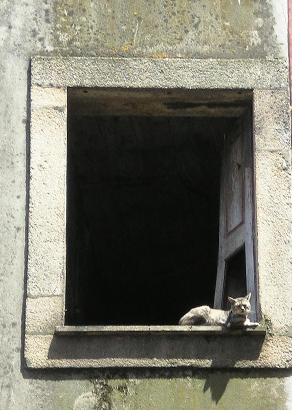 Gato tripeiro