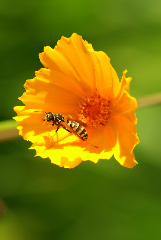 A vespa