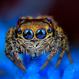 by Jimmy Kong - Animals Insects & Spiders