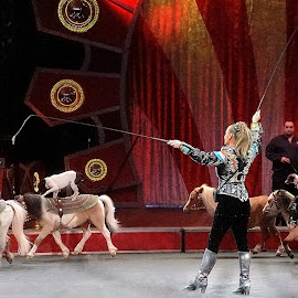 Circus Ponies and Dogs by Stephen Beatty - News & Events Entertainment ( woman, people, entertainment )