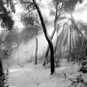 by David Monjou - Landscapes Forests