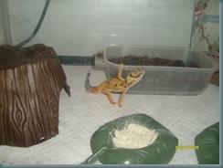 Gecko no2 2