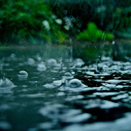 Rain by Morgan Capener - Novices Only Macro