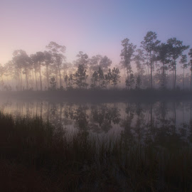 Misty Morning by Troy Wheatley - Landscapes Waterscapes ( nature, fog, lake, sunrise, landscape, pine )