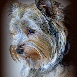 by Denise Shreve - Animals - Dogs Portraits