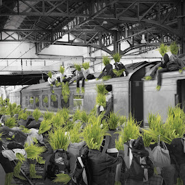 grass people escape by Woo Yuen Foo - People Group/Corporate ( selective color, pwc )