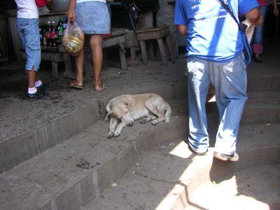 Market dog.jpg