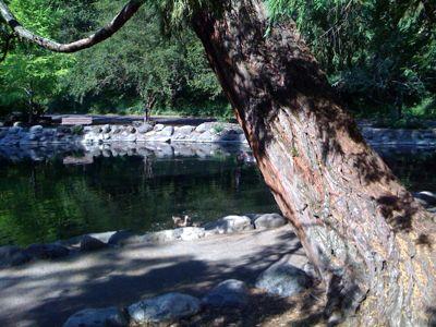 Lithia Park pond.jpg