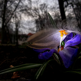 *** by Jurijs Ratanins - Instagram & Mobile Android ( mobilography, park, drops, light, flower )