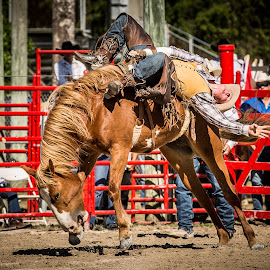 Barely Hanging On by Troy Wheatley - Sports & Fitness Rodeo/Bull Riding ( cowboy, horse, rodeo, bronco, bucking,  )