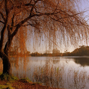 Lagoon's tree by Gil Reis - Nature Up Close Trees & Bushes ( water, nature, zen, trees, travel, lagoons, portugal,  )