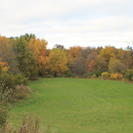 fall colors by Christine Bartlett Csiszer - Landscapes Prairies, Meadows & Fields ( fall, color, colorful, nature )