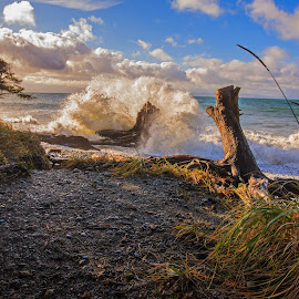 by Dave Mann - Landscapes Beaches ( shirley, straits of juan de fuca, vancouver island, french beach, british columbia )