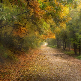 Autumn by Károly Trombitás - Landscapes Forests ( wild, wood, forest, landscape, colours, bird, wilderness, sky, leafs, nature, autumn, trees, animal )