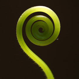 Nature Swirly by Rhonda Musgrove - Nature Up Close Other plants ( swirl, green, vine, curl, garden )
