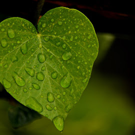 rainy heart by Nikša Šapro - Nature Up Close Leaves & Grasses ( d7100, saproni, nikon )