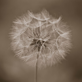 by Alan Wilson - Novices Only Flowers & Plants