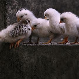 by Sirajuddin Halim - Animals Other
