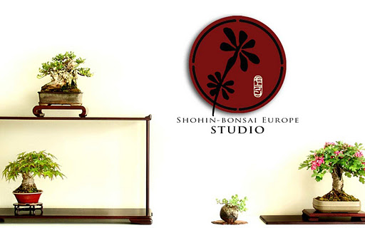 Shohin-bonsai Europe