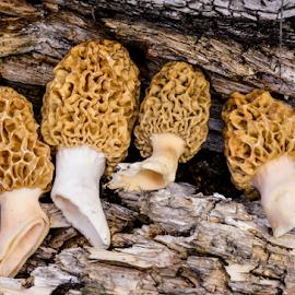 by Erik Anderson - Nature Up Close Mushrooms & Fungi