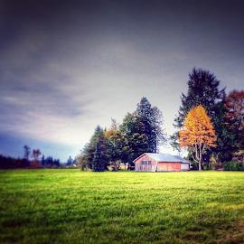 by Todd Reynolds - Landscapes Prairies, Meadows & Fields ( fall, barn, toddreynoldsphotography )