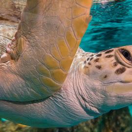 Crush by David Kobuszewski - Novices Only Wildlife ( sealife, aquarium, turtle, swimming )