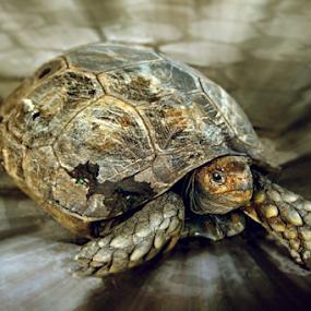 BIDAWANG BANGKAK by Lay Sulaiman - Animals Reptiles