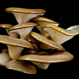 by Ann Bjerring Ravn Weis - Nature Up Close Mushrooms & Fungi