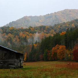 Autumn Mist In Cattaloochee Valley by Teresa Daines - Landscapes Mountains & Hills ( barn, autumn, elk, smokies, mist )