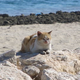 Cat on the sea shore by Deepak Kumar - Animals - Cats Portraits ( potrait, cat,  )