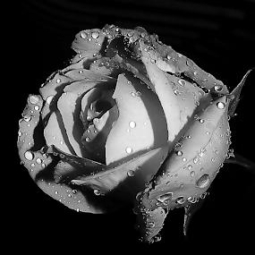 by JOEL Graphuchin - Black & White Flowers & Plants (  )