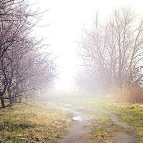 Foggy by Marta Bednarska - Landscapes Weather ( fog, opole, landscapes )