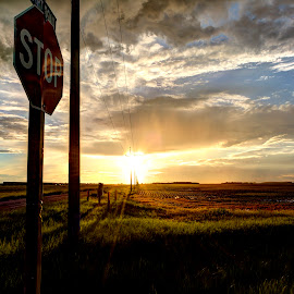 STOP and admire by Paul Stadnyk - Landscapes Prairies, Meadows & Fields ( field, sky, sunset, summer, stop sign )