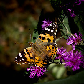 Butterfly And Flowers by Brenda Hooper - Flowers Flowers in the Wild ( butterfly, mountains, purple, nature, flower,  )