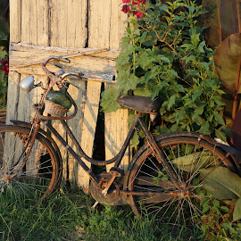 Time gone by by Davis Hotard - Artistic Objects Still Life ( rust, past, italy, country, bicycle )