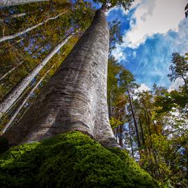 beech by Stanislav Horacek - Landscapes Forests