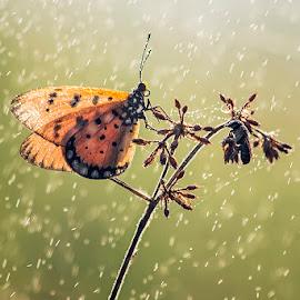 2 by Sandi Nopri yanto - Animals Insects & Spiders