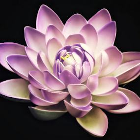 by Chandra Wirawan - Nature Up Close Flowers - 2011-2013