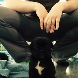 #7 kids named him Oreo til he has a new owner by Liz Granholm - Animals - Dogs Puppies