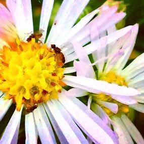 by Kisha Webb - Flowers Flowers in the Wild