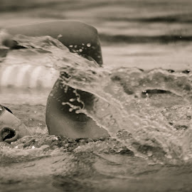 by Noel Colina - Sports & Fitness Swimming ( woman, b&w, portrait, person )