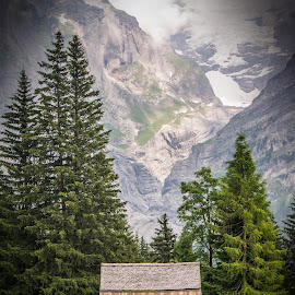 Mountain Hut by Laura Kenny - Landscapes Mountains & Hills ( mountain, hut, grindelwald, trees, switzerland )