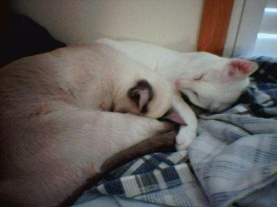 sleepingbeauties