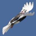 Fleeing Birds icon