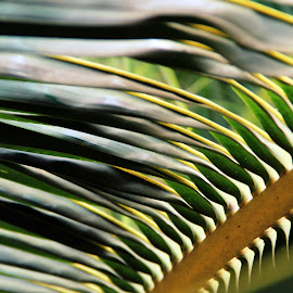 Pattern by Prasad Gaude - Abstract Patterns ( pattern, coconut tree, leaf )