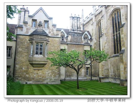 牛顿-苹果树