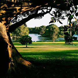 Centennial Parklands by Corina Dodovski - Instagram & Mobile Android ( park, trees, lake, sydney, centennial park )