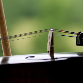fiddle by Steven Faucette - Artistic Objects Musical Instruments ( violin, musical, strings, fiddle )